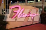 Flamingo sign 1 - Don McCarthy